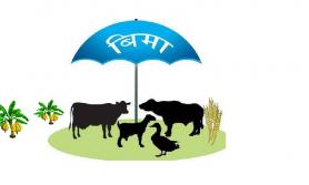 कृषि बीमाको अनुदान रकम वृद्धि
