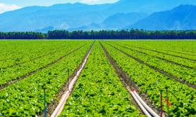सिँचाइमार्फत रोजगारीः ऊर्जाको नयाँ कार्यक्रम