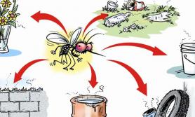 'डेंगुले ६ जनाको मृत्यु, ५ हजार व्यक्ति संक्रमित, आपत्कालीन अवस्था घोषणा गर्नु पर्दैन'