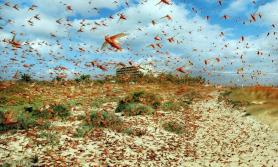 किसानलाई अर्को चुनौतीः भारतबाट सलह नेपाल छिर्दै