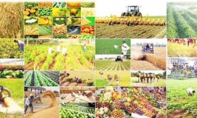 नयाँ निर्देशिकाः कुल व्यवसायमा ५ प्रतिशत कृषि बीमा हुनुपर्ने अनिवार्य व्यवस्था