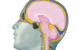 अमेरिकामा दिमाग नष्ट गर्ने रोग फैलिदै,  १ देखि ८ दिनमा मृत्यु हुन सक्ने