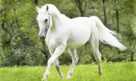 तलेजुको वाहन सेतो घोडाको जात्रा सम्पन्न