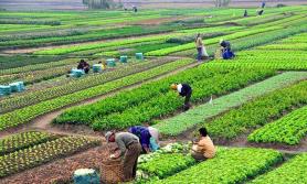 स्थानीय उत्पादन बजारसम्म पुगेन, भारतीय उत्पादन गाउँगाउँमा