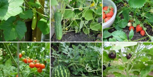 तरकारी खेतीः खेतबारीमा मात्रै होइन कौसीमा पनि फलाउने भान्सामा पकाउने