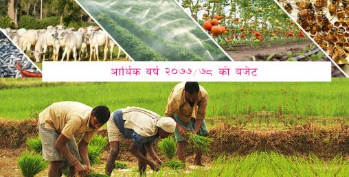 आगामी बजेटः कृषि क्षेत्र आर्थिक विकासको मूल आधार