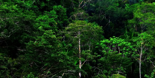 सबैभन्दा बढी वन कर्णाली प्रदेशमा