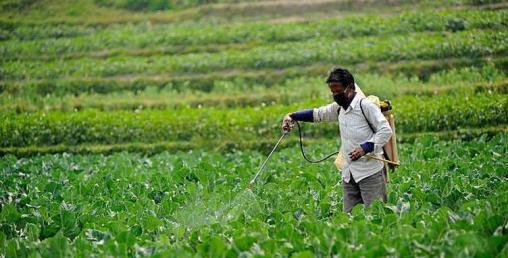 किसानका पीडाः पुरस्कार आठानी, खर्च रुपैयाँ !