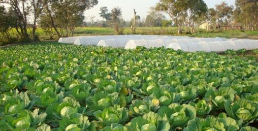बिर्तामोडका कृषक प्राङ्गारिक खेतीमा
