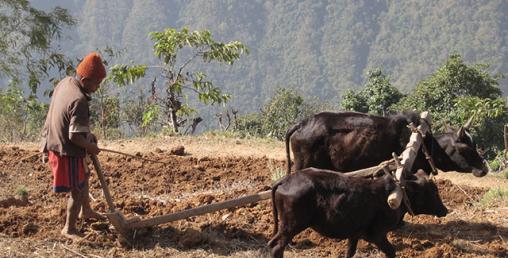 मोदीले सुन्लान् त नेपाली किसानका दुख ?