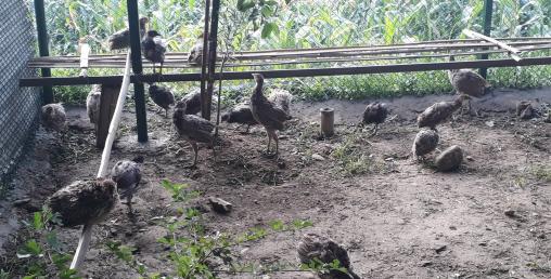 कालिजको ब्यवासायिक उत्पादन भक्तपुरमै शुरु