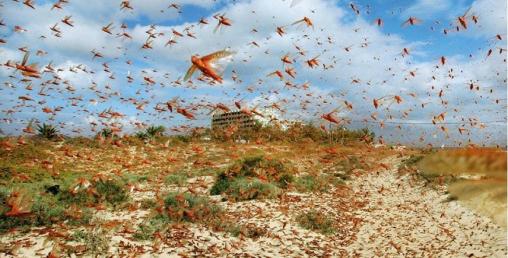 विज्ञको दावीः नेपालमा सलहले ठूलो क्षति गर्दैन